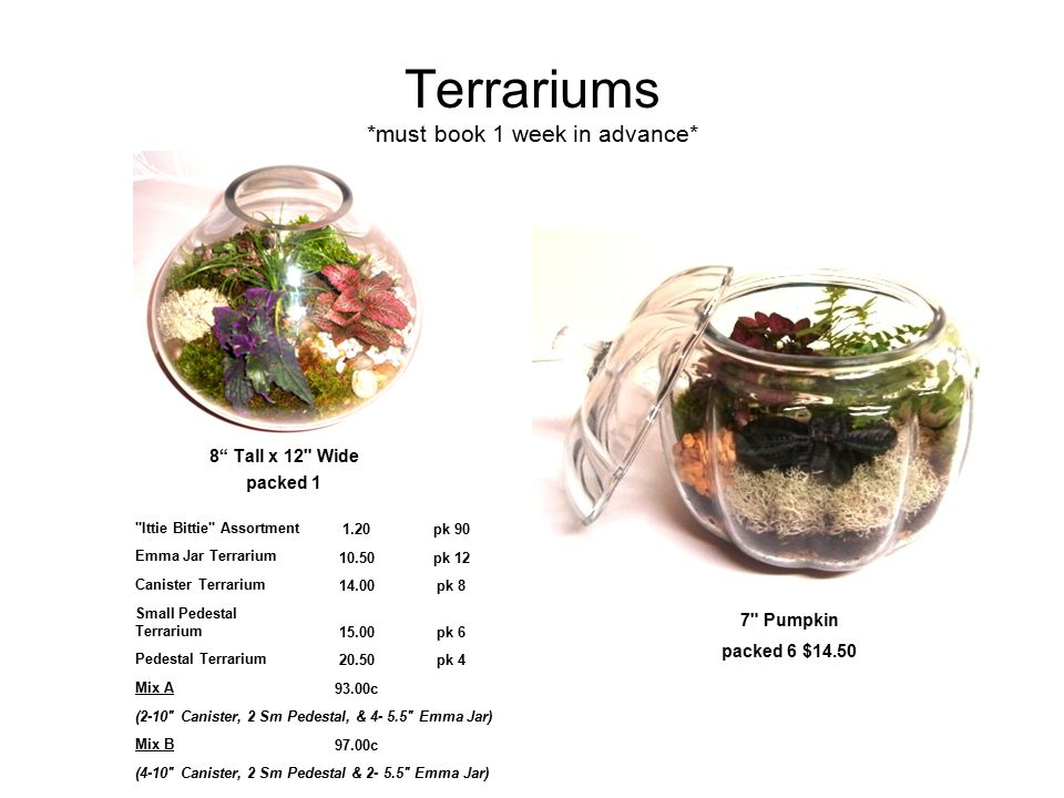 Terrariums *must book 1 week in advance* 8 Tall x 12 Wide packed 1 7 Pumpkin packed 6 $14.50 Ittie Bittie Assortment1.20pk 90 Emma Jar Terrarium 10.50pk 12 Canister Terrarium14.00pk 8 Small Pedestal Terrarium15.00pk 6 Pedestal Terrarium20.50pk 4 Mix A93.00c (2-10 Canister, 2 Sm Pedestal, & 4- 5.5 Emma Jar) Mix B97.00c (4-10 Canister, 2 Sm Pedestal & 2- 5.5 Emma Jar)