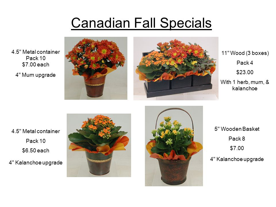 Canadian Fall Specials 4.5 Metal container Pack 10 $7.00 each 4 Mum upgrade 4.5 Metal container Pack 10 $6.50 each 4 Kalanchoe upgrade 5 Wooden Basket Pack 8 $7.00 4 Kalanchoe upgrade 11 Wood (3 boxes) Pack 4 $23.00 With 1 herb, mum, & kalanchoe