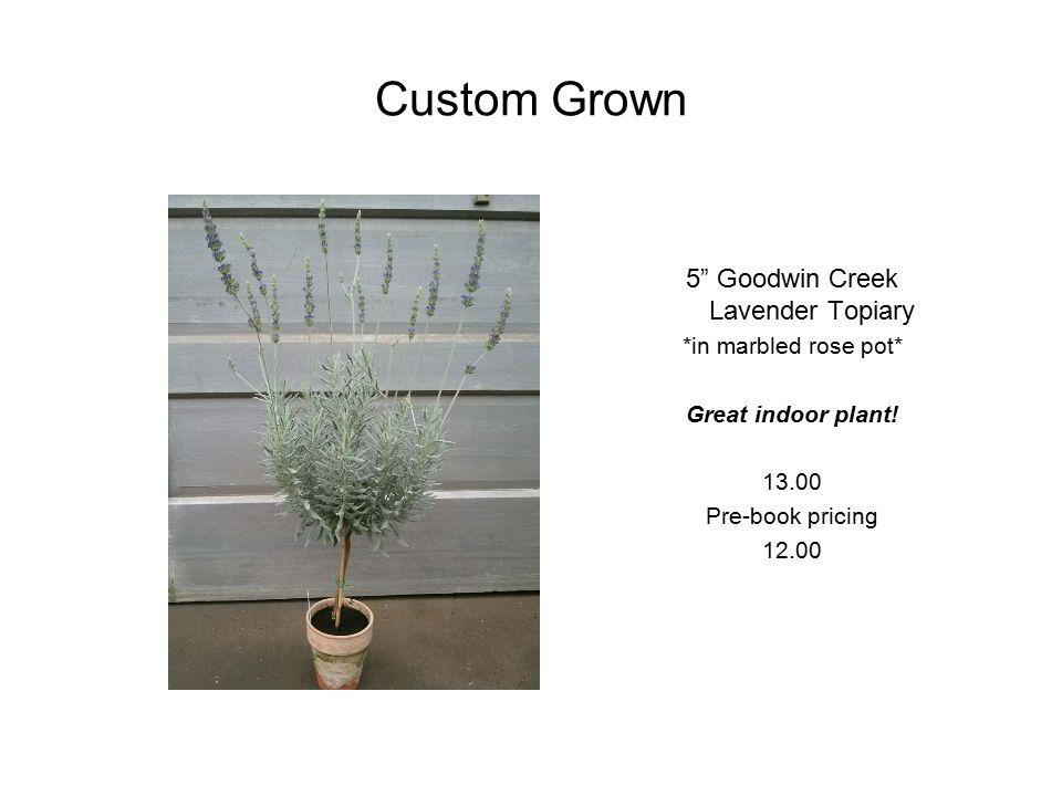 Custom Grown 4.5 Boxwood Honeysuckle 5.00 Pre-Booking Price 4.50