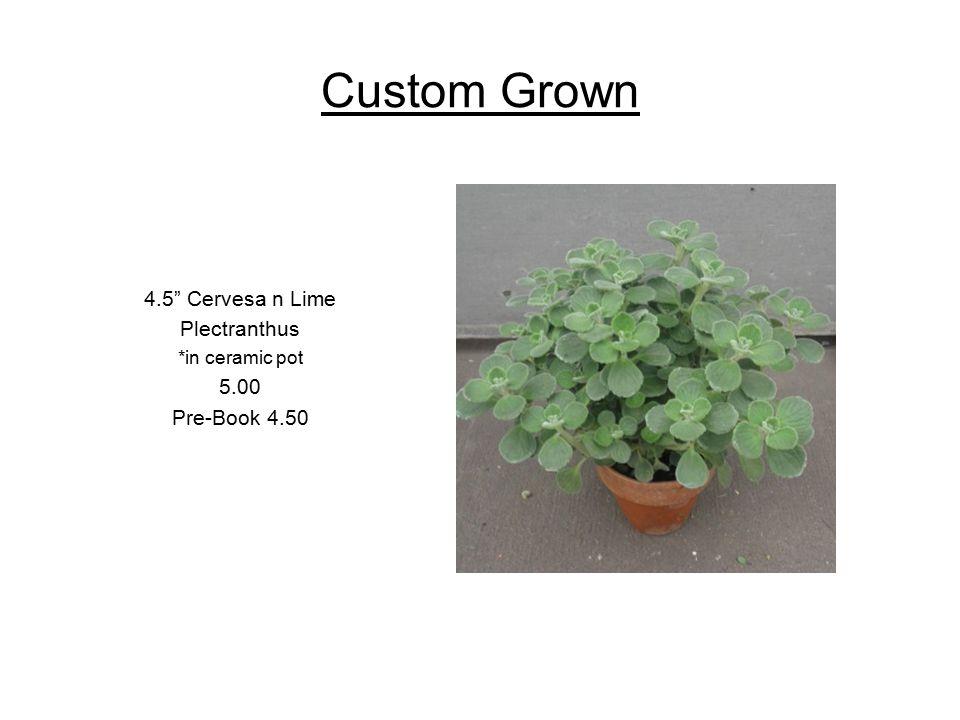 Custom Grown 4.5 Angel Vine *in ceramic pot 5.00 Pre-Book 4.50