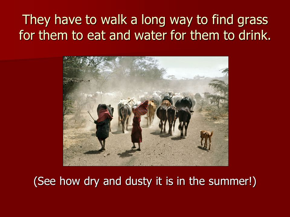 They have to walk a long way to find grass for them to eat and water for them to drink.
