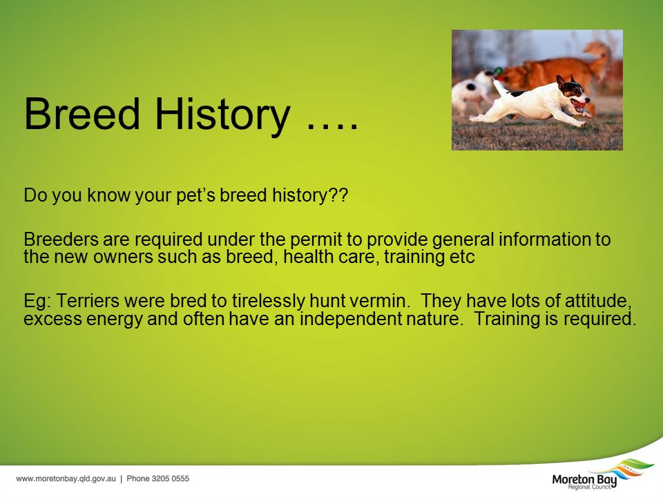 Breed History …. Do you know your pet's breed history .