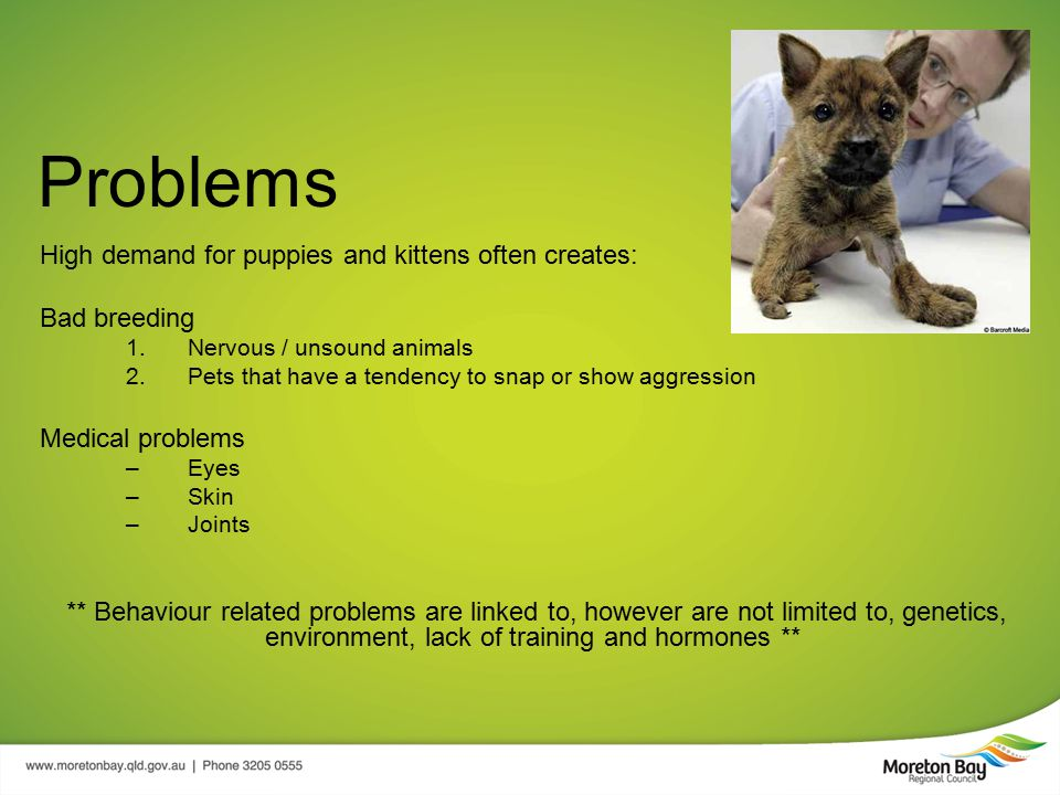 Problems High demand for puppies and kittens often creates: Bad breeding 1.Nervous / unsound animals 2.Pets that have a tendency to snap or show aggression Medical problems –Eyes –Skin –Joints ** Behaviour related problems are linked to, however are not limited to, genetics, environment, lack of training and hormones **