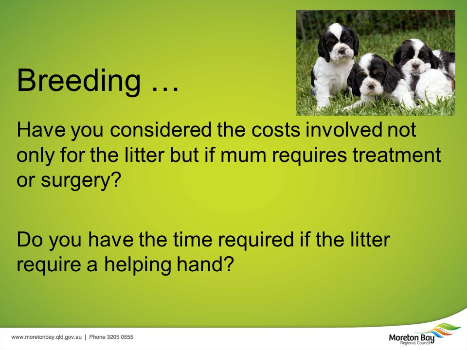 Breeding … Have you considered the costs involved not only for the litter but if mum requires treatment or surgery.