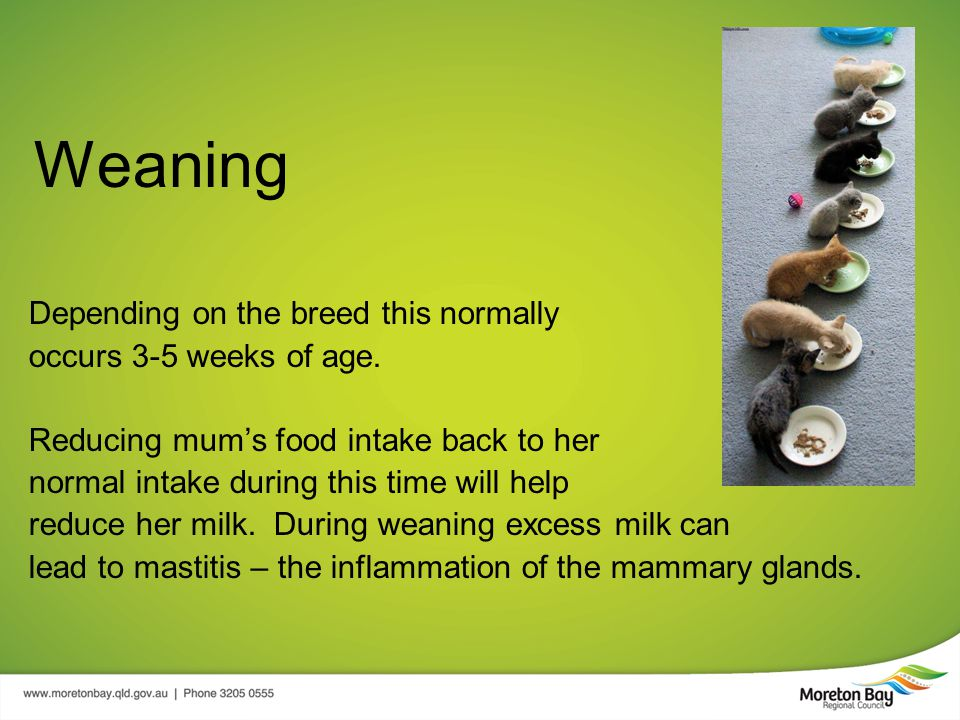Weaning Depending on the breed this normally occurs 3-5 weeks of age.