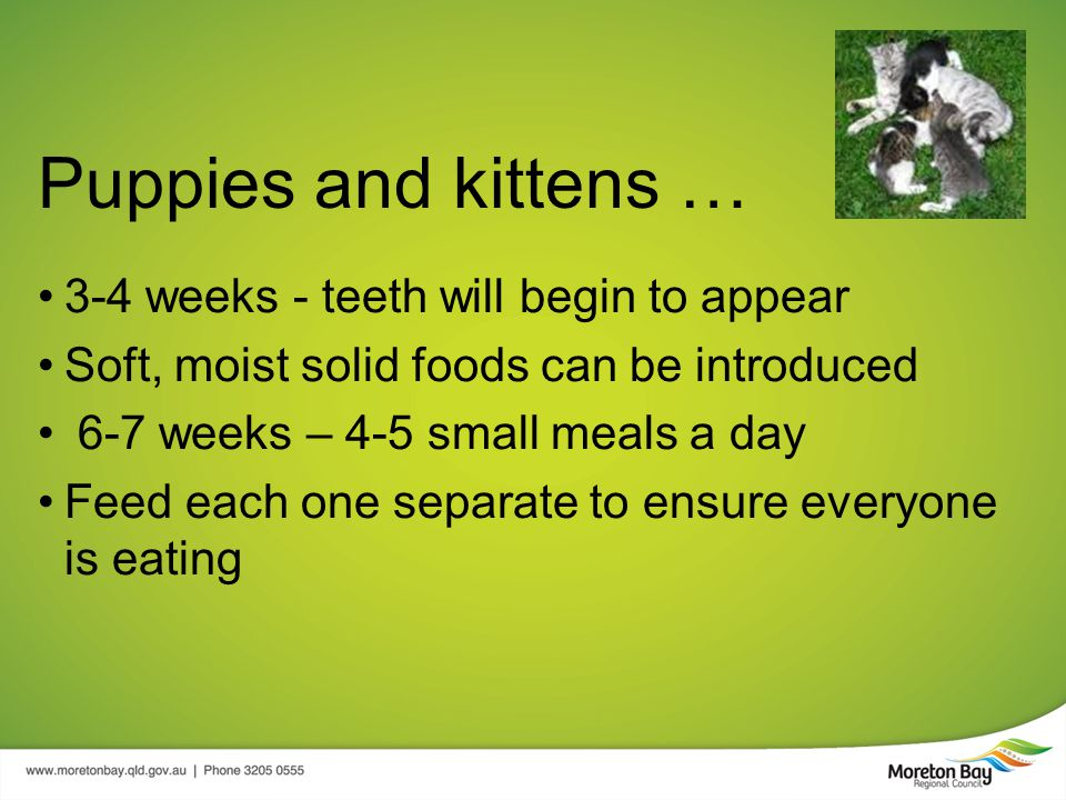 Puppies and kittens … 3-4 weeks - teeth will begin to appear Soft, moist solid foods can be introduced 6-7 weeks – 4-5 small meals a day Feed each one separate to ensure everyone is eating