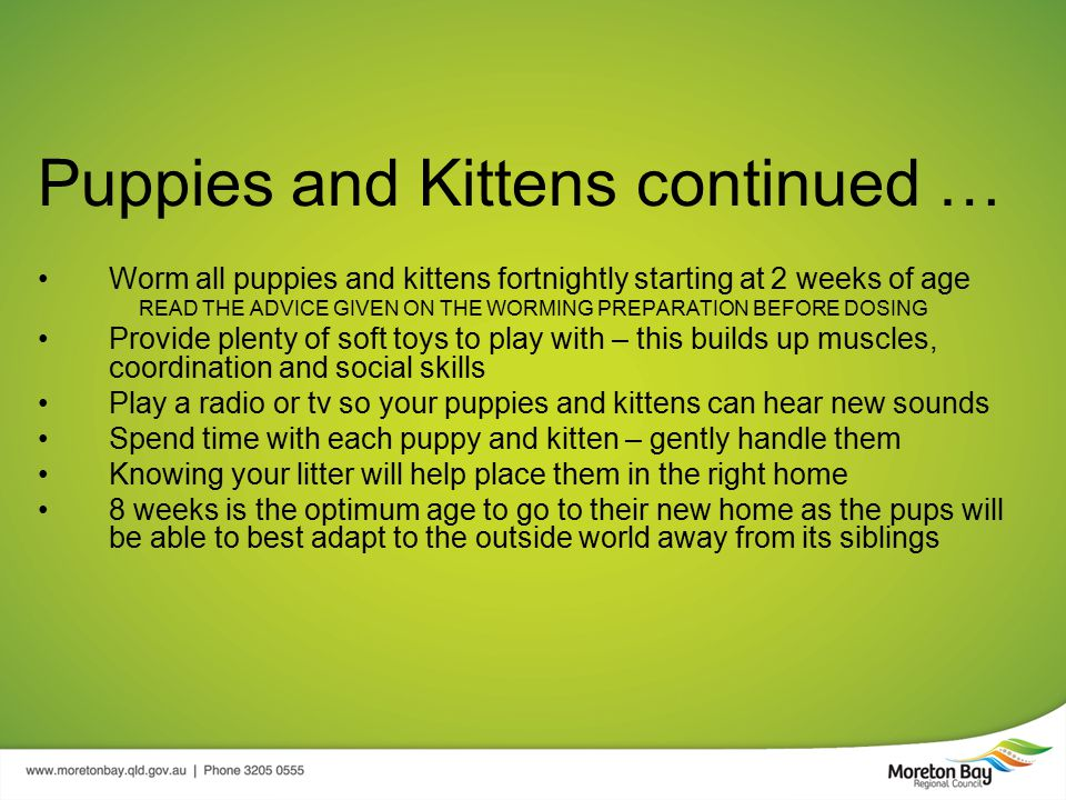Puppies and Kittens continued … Worm all puppies and kittens fortnightly starting at 2 weeks of age READ THE ADVICE GIVEN ON THE WORMING PREPARATION BEFORE DOSING Provide plenty of soft toys to play with – this builds up muscles, coordination and social skills Play a radio or tv so your puppies and kittens can hear new sounds Spend time with each puppy and kitten – gently handle them Knowing your litter will help place them in the right home 8 weeks is the optimum age to go to their new home as the pups will be able to best adapt to the outside world away from its siblings