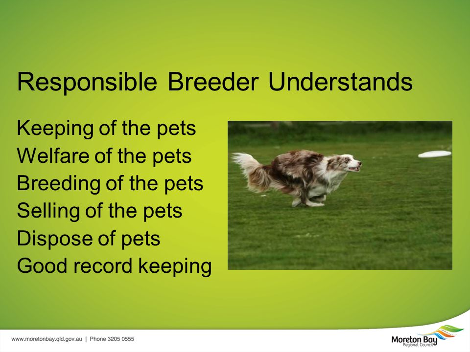 Responsible Breeder Understands Keeping of the pets Welfare of the pets Breeding of the pets Selling of the pets Dispose of pets Good record keeping