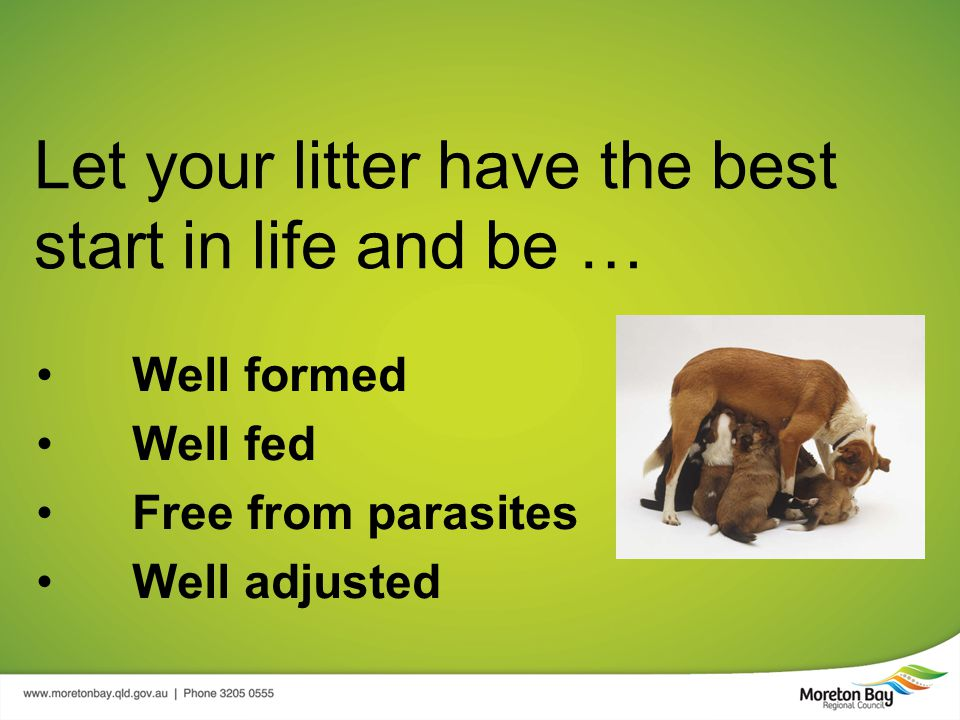 Let your litter have the best start in life and be … Well formed Well fed Free from parasites Well adjusted