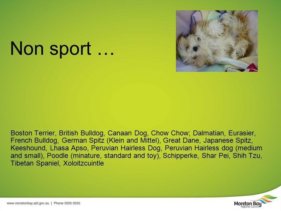 Non sport … Boston Terrier, British Bulldog, Canaan Dog, Chow Chow; Dalmatian, Eurasier, French Bulldog, German Spitz (Klein and Mittel), Great Dane, Japanese Spitz, Keeshound, Lhasa Apso, Peruvian Hairless Dog, Peruvian Hairless dog (medium and small), Poodle (minature, standard and toy), Schipperke, Shar Pei, Shih Tzu, Tibetan Spaniel, Xoloitzcuintle