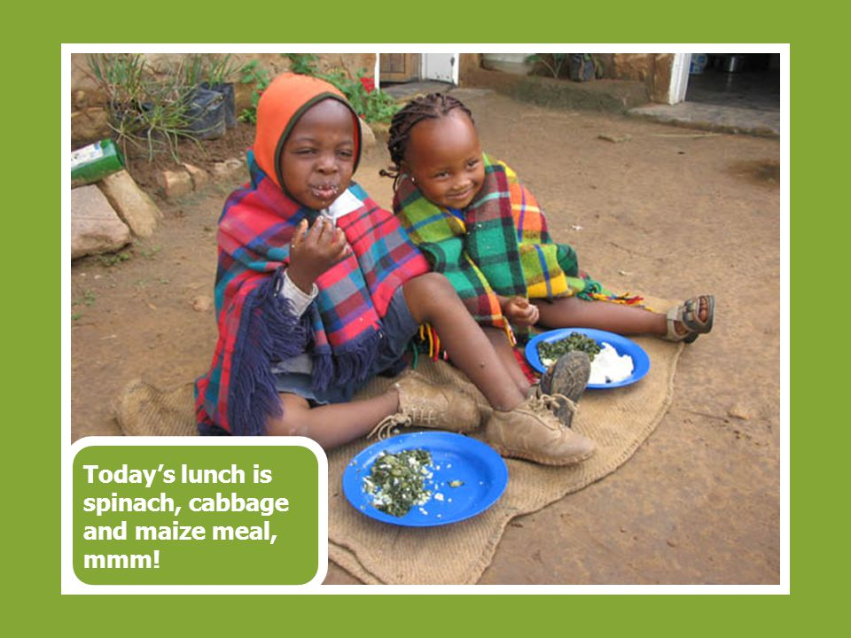 Today's lunch is spinach, cabbage and maize meal, mmm!