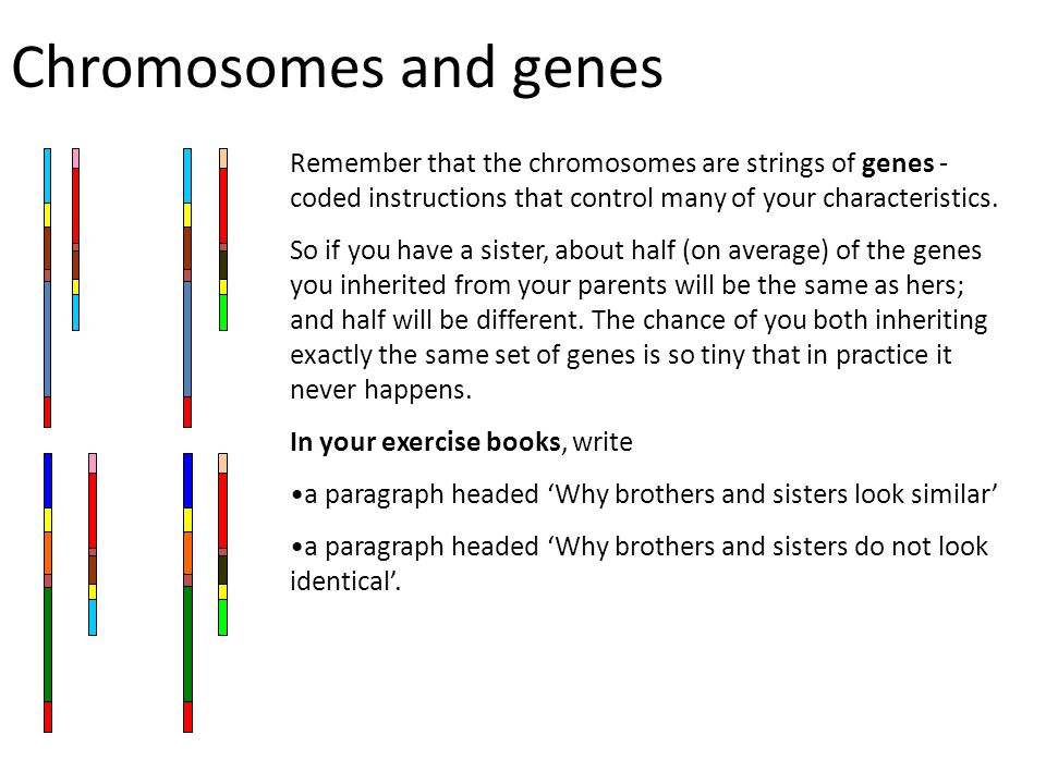 Chromosomes and genes Remember that the chromosomes are strings of genes - coded instructions that control many of your characteristics. So if you hav