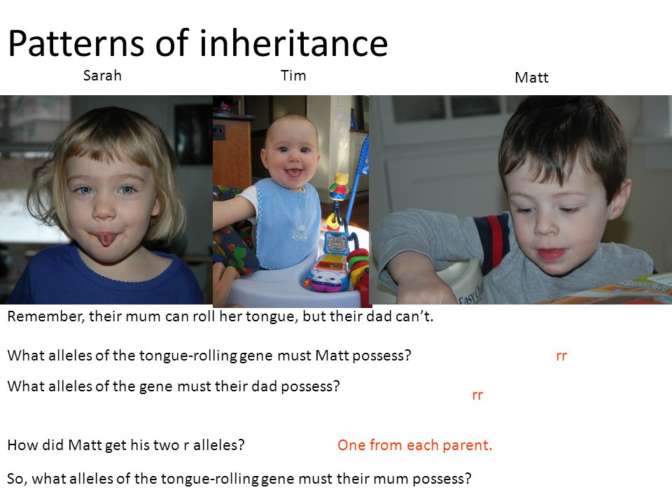 Patterns of inheritance SarahTim Matt Remember, their mum can roll her tongue, but their dad can't. What alleles of the tongue-rolling gene must Matt