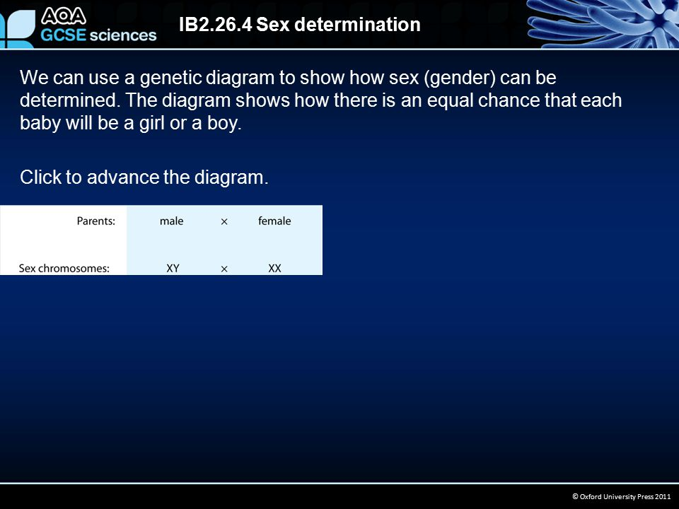 IB2.26.4 Sex determination © Oxford University Press 2011 We can use a genetic diagram to show how sex (gender) can be determined.