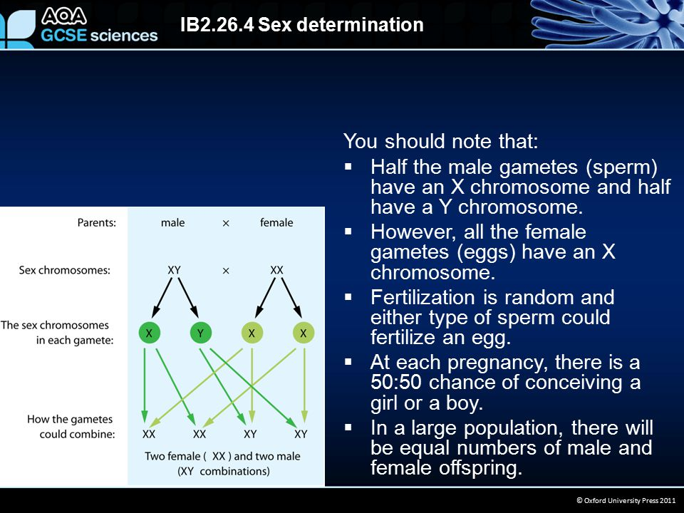 IB2.26.4 Sex determination © Oxford University Press 2011 When constructing a genetic diagram for a monohybrid cross, it is important to follow these conventions:  Show the characteristic of the parents (phenotype).
