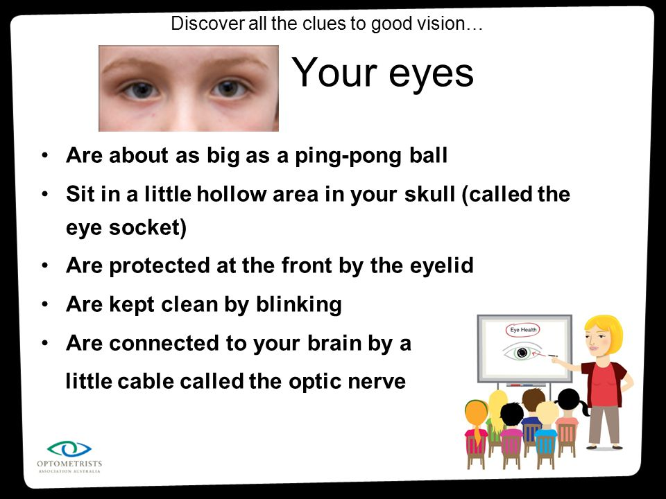 Are about as big as a ping-pong ball Sit in a little hollow area in your skull (called the eye socket) Are protected at the front by the eyelid Are ke