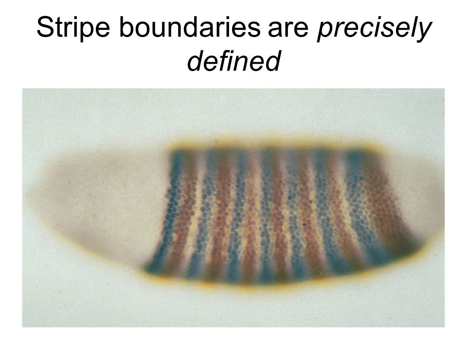 Stripe boundaries are precisely defined