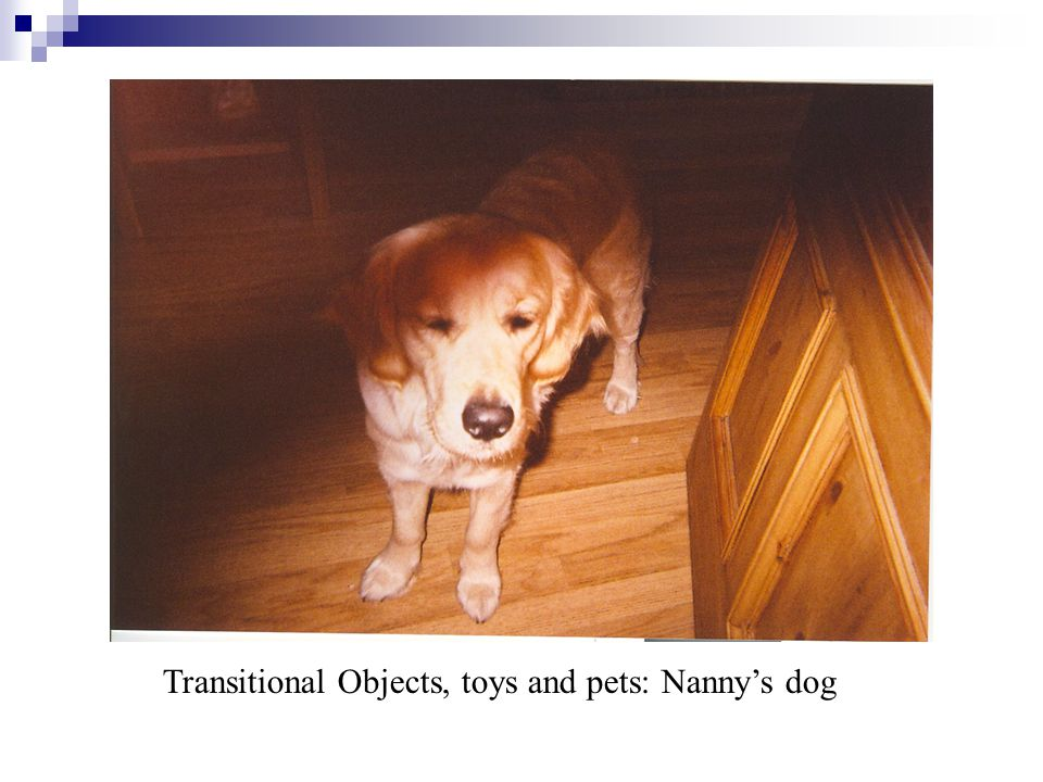 Transitional Objects, toys and pets: Nanny's dog