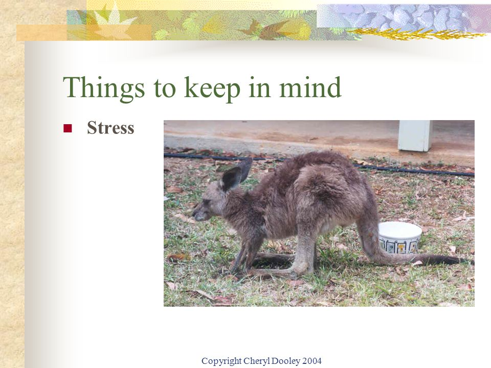 Copyright Cheryl Dooley 2004 Things to keep in mind Stress