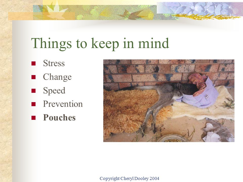 Copyright Cheryl Dooley 2004 Things to keep in mind Stress Change Speed Prevention Pouches