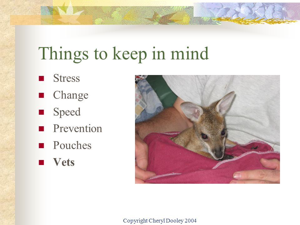 Copyright Cheryl Dooley 2004 Things to keep in mind Stress Change Speed Prevention Pouches Vets