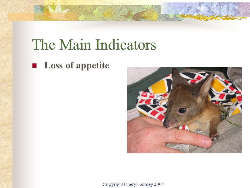 Copyright Cheryl Dooley 2004 The Main Indicators Loss of appetite