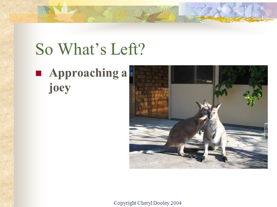 Copyright Cheryl Dooley 2004 So What's Left? Approaching a joey