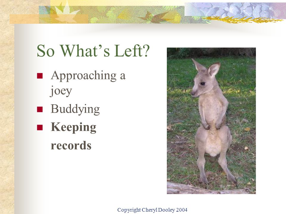 Copyright Cheryl Dooley 2004 So What's Left? Approaching a joey Buddying Keeping records