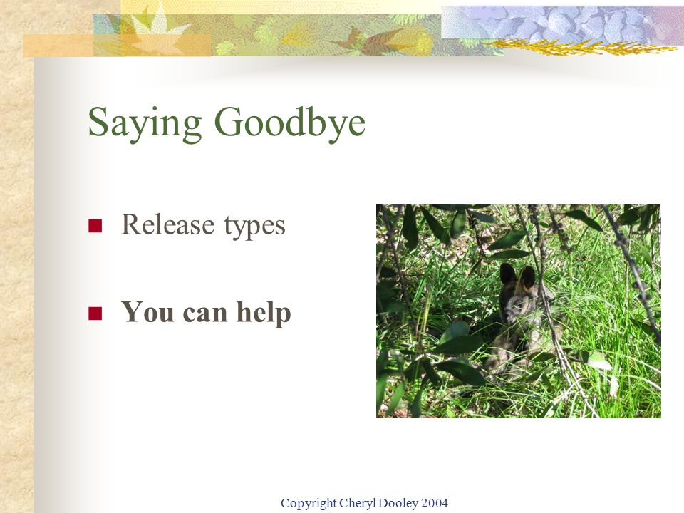 Copyright Cheryl Dooley 2004 Saying Goodbye Release types You can help