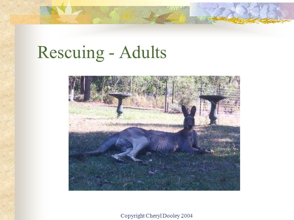 Copyright Cheryl Dooley 2004 Rescuing - Adults