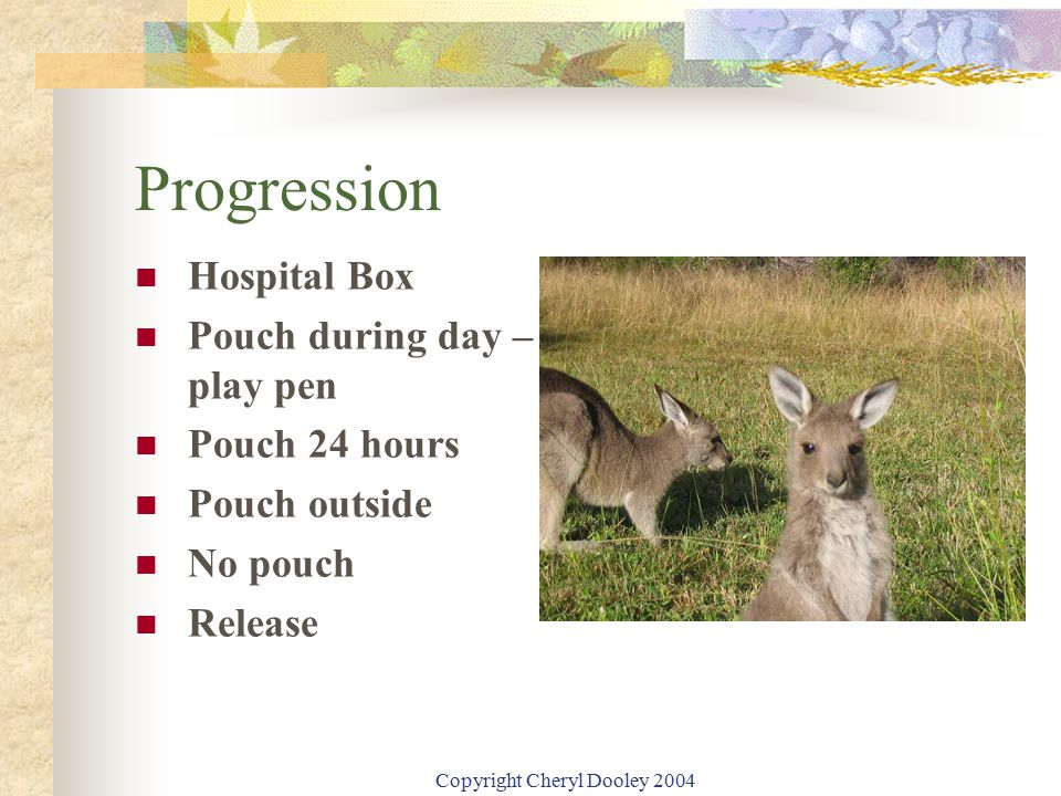 Copyright Cheryl Dooley 2004 Progression Hospital Box Pouch during day – play pen Pouch 24 hours Pouch outside No pouch Release