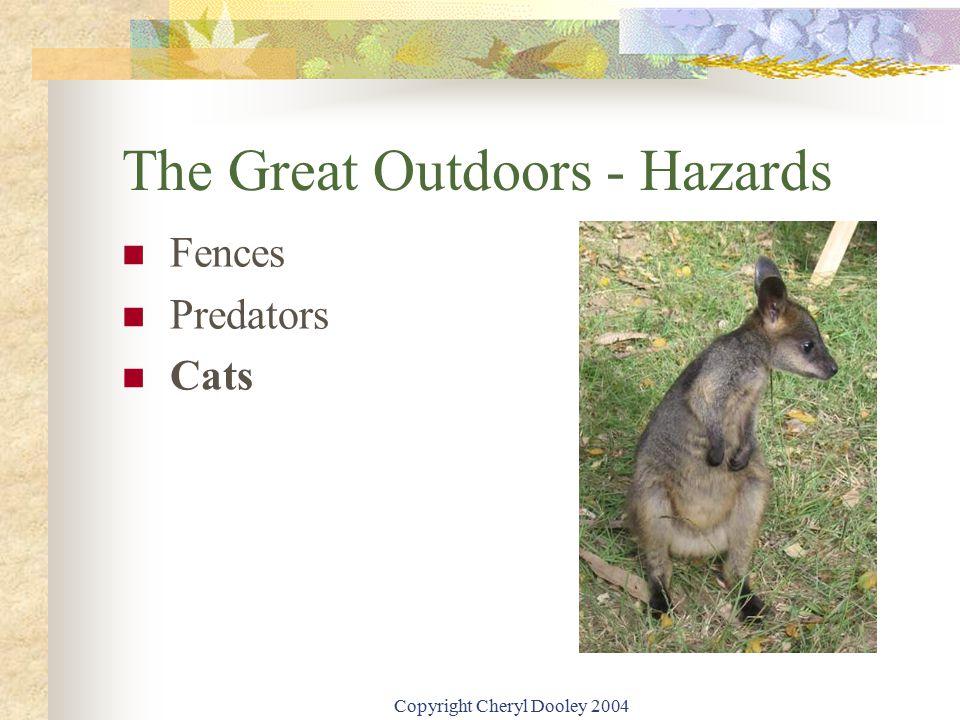 Copyright Cheryl Dooley 2004 The Great Outdoors - Hazards Fences Predators Cats