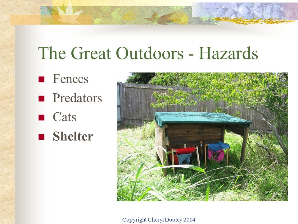 Copyright Cheryl Dooley 2004 The Great Outdoors - Hazards Fences Predators Cats Shelter