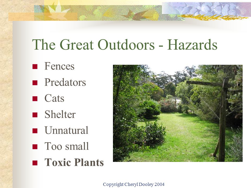 Copyright Cheryl Dooley 2004 The Great Outdoors - Hazards Fences Predators Cats Shelter Unnatural Too small Toxic Plants