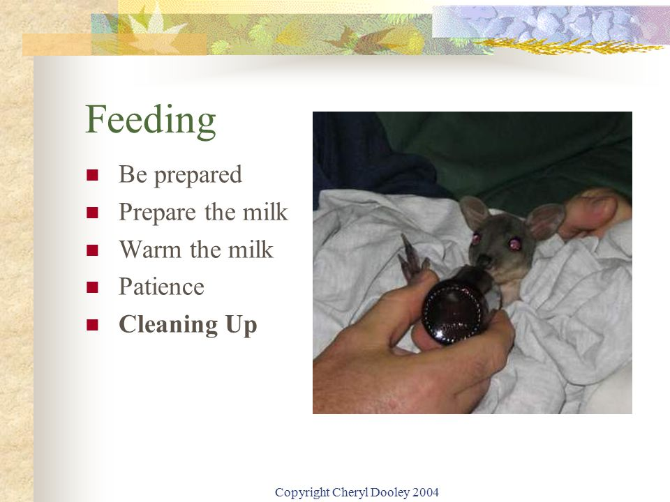 Copyright Cheryl Dooley 2004 Feeding Be prepared Prepare the milk Warm the milk Patience Cleaning Up