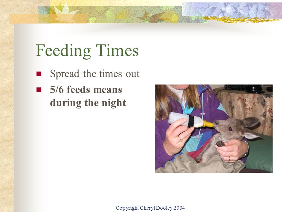 Copyright Cheryl Dooley 2004 Feeding Times Spread the times out 5/6 feeds means during the night