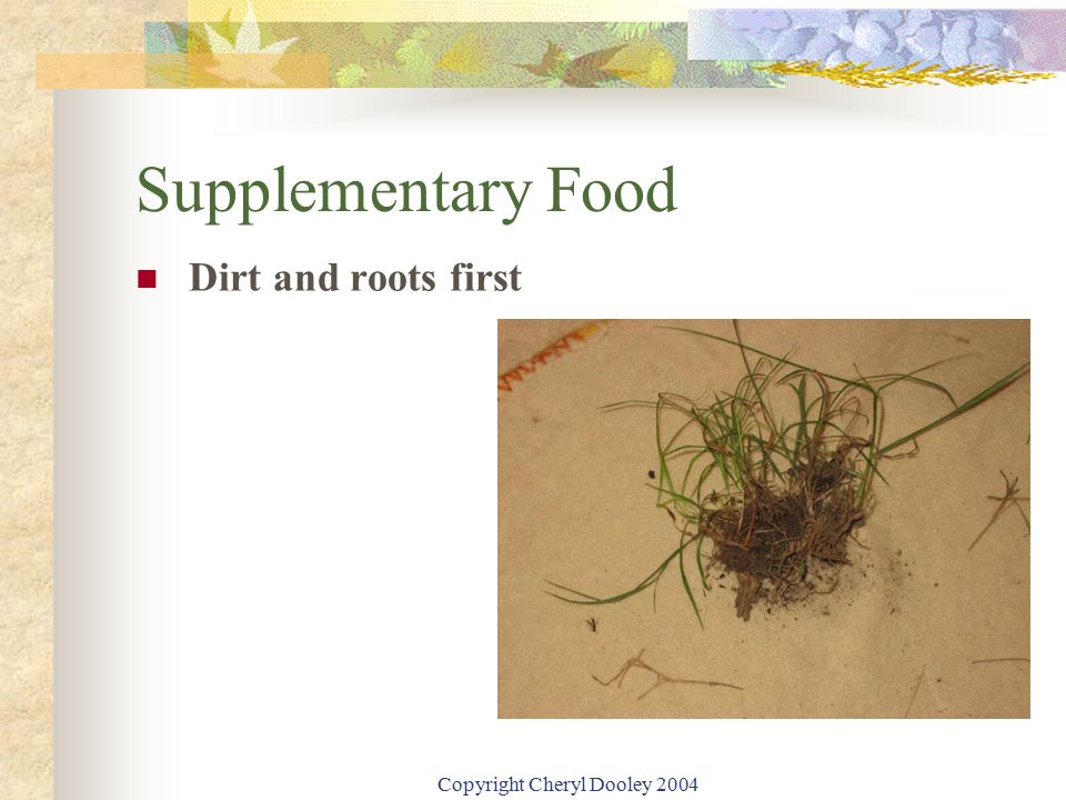 Copyright Cheryl Dooley 2004 Supplementary Food Dirt and roots first