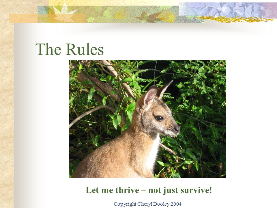 Copyright Cheryl Dooley 2004 The Rules Let me thrive – not just survive!