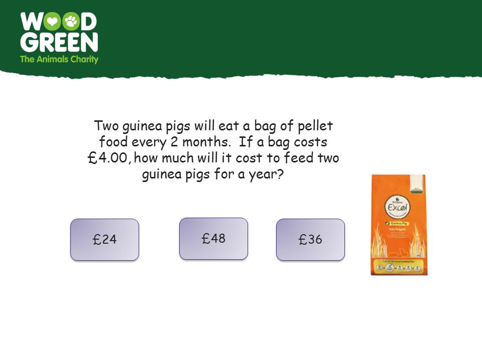 Two guinea pigs will eat a bag of pellet food every 2 months. If a bag costs £4.00, how much will it cost to feed two guinea pigs for a year? £24 £48