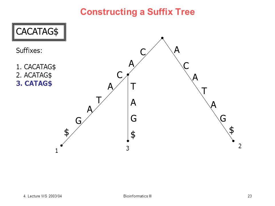 4. Lecture WS 2003/04Bioinformatics III23 Constructing a Suffix Tree CACATAG$ Suffixes: 1.