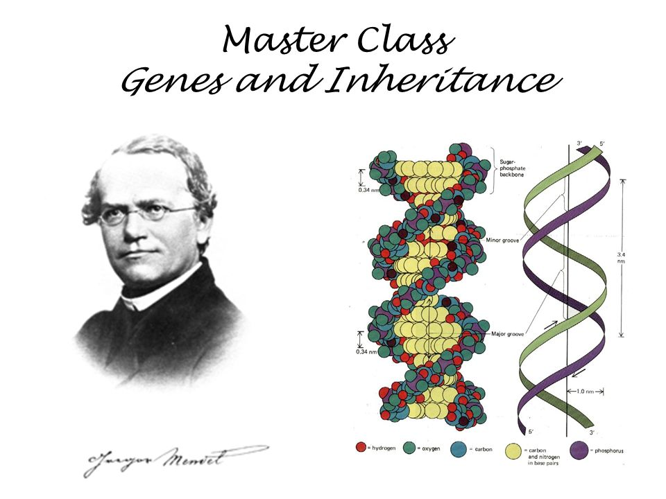 Master Class Genes and Inheritance