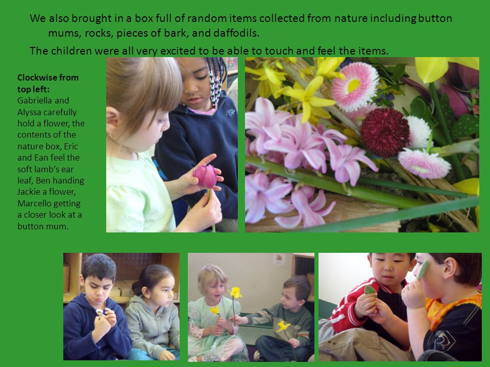 We also brought in a box full of random items collected from nature including button mums, rocks, pieces of bark, and daffodils.