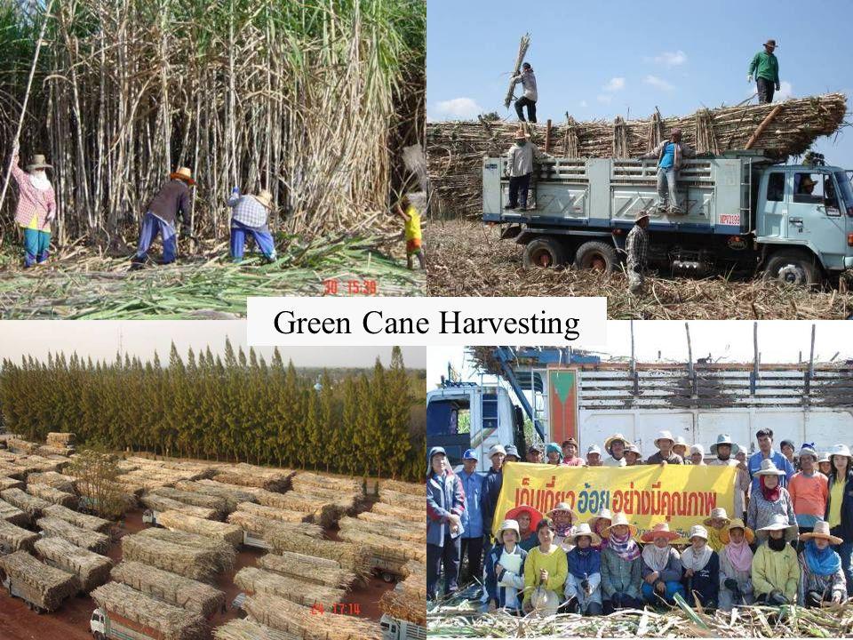 Green Cane Harvesting 19