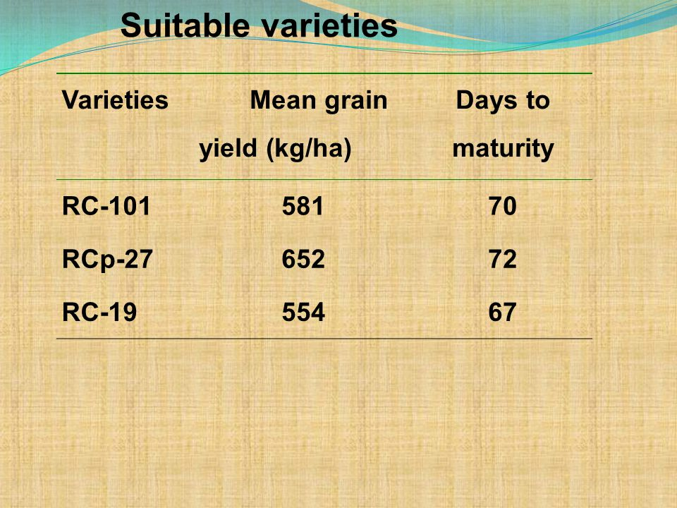 Varieties Mean grain yield (kg/ha) Days to maturity RC-10158170 RCp-2765272 RC-1955467 Suitable varieties