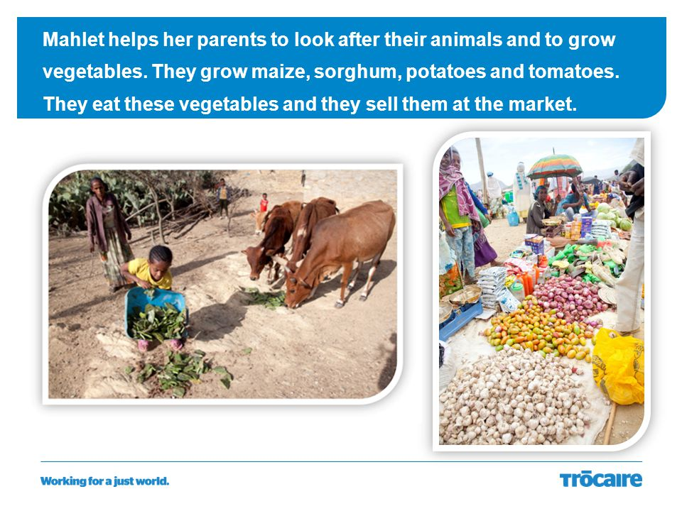Mahlet helps her parents to look after their animals and to grow vegetables. They grow maize, sorghum, potatoes and tomatoes. They eat these vegetable
