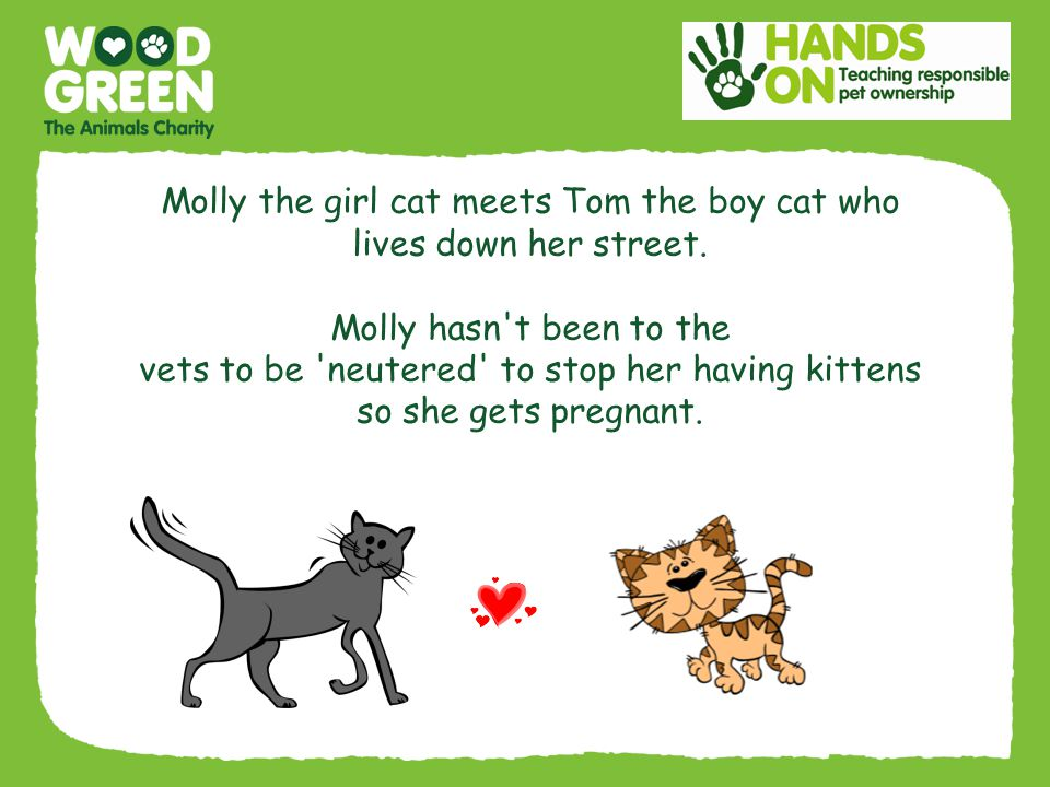 Molly the girl cat meets Tom the boy cat who lives down her street.