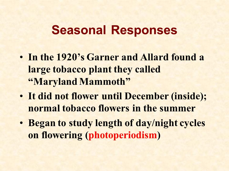 Seasonal Responses In the 1920's Garner and Allard found a large tobacco plant they called Maryland Mammoth It did not flower until December (inside); normal tobacco flowers in the summer Began to study length of day/night cycles on flowering (photoperiodism)