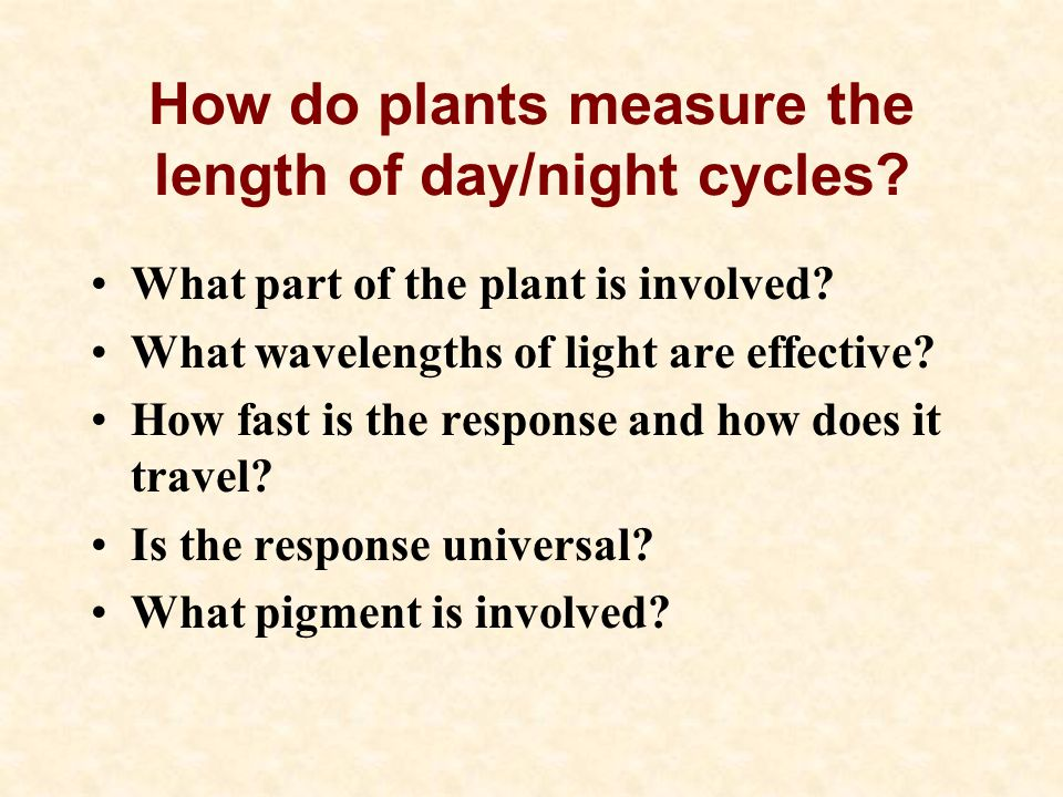 How do plants measure the length of day/night cycles.