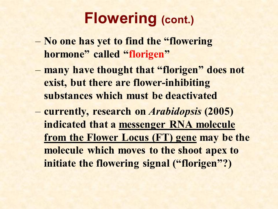 Flowering (cont.) –No one has yet to find the flowering hormone called florigen –many have thought that florigen does not exist, but there are flower-inhibiting substances which must be deactivated –currently, research on Arabidopsis (2005) indicated that a messenger RNA molecule from the Flower Locus (FT) gene may be the molecule which moves to the shoot apex to initiate the flowering signal ( florigen ?)