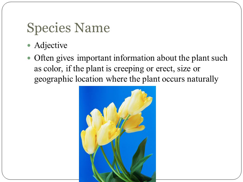Species Name Adjective Often gives important information about the plant such as color, if the plant is creeping or erect, size or geographic location